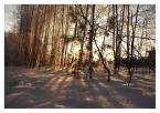 """Miqel """"Cisza"""" (2003-01-04 12:44:11) komentarzy: 1, ostatni: nalepsze jest to że drzewa lecą..."""