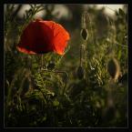"""-MIRABELL- """"Czemu kwiaty patrzą na mnie podejrzliwie?"""" (2005-06-09 19:11:12) komentarzy: 52, ostatni: ladne swiatlo... i ogolnie - ladnie"""