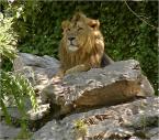 """toluse """"król Lew"""" (2005-06-12 19:55:38) komentarzy: 18, ostatni: moja krew :)"""