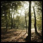 """DELF """"myśli drzew"""" (2005-06-13 22:46:21) komentarzy: 90, ostatni: można się zapatrzeć ;D"""