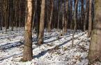 """Antoni Dziuban """"zimowy las"""" (2003-01-07 21:49:24) komentarzy: 42, ostatni: NIby zwykły las, ale ma swój urok... Ładne :-)))"""