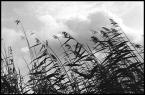 """Kavka """"trzcina"""" (2005-06-24 20:24:03) komentarzy: 8, ostatni: Ugh... kiepskie, do niczego"""