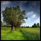 """Tomasz Stawowy """"ogrodu serce"""" (2005-06-28 06:34:46) komentarzy: 135, ostatni: To też jest bardzo ładne, takie czyste, takie naturalne."""