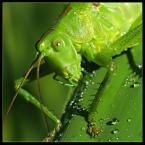 """Slawcio """"Pasikonik zielony"""" (2005-07-04 15:44:29) komentarzy: 43, ostatni: Mimo odblasków, ogląda się bardzo dobrze. Świetny kadr. Bdb +"""