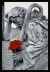 """irmi """"kolor smutku"""" (2005-07-17 09:12:46) komentarzy: 10, ostatni: Czerwień tego kwiata świetnie kontrastuje z resztą."""