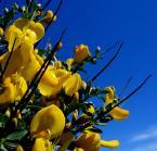 """Fotodr """"na żółto i na niebiesko"""" (2005-07-21 22:04:39) komentarzy: 15, ostatni: Albula , majeczka -dzięki i pozdrawiam"""