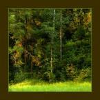 """Wołodytjowski """"Leśna ściana"""" (2005-08-03 23:19:37) komentarzy: 44, ostatni: kolor ramki troche nie pasuje ale fotka jest OK"""