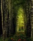 """makama """"W elfowym lesie"""" (2005-08-08 21:16:11) komentarzy: 79, ostatni: Piękne!"""