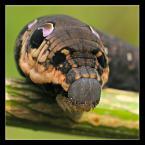 """Slawcio """"Strach ma wielkie oczy"""" (2005-08-19 09:58:10) komentarzy: 30, ostatni: o!:)"""