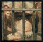 """SławeK WaW """"Małpi Raj.........?"""" (2005-08-20 21:44:42) komentarzy: 8, ostatni: Bardzo OK !!!"""