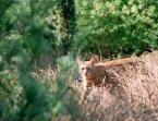 """karoten """"Portret pamięciowy seryjnego mordercy jaszczurek"""" (2005-08-25 22:19:50) komentarzy: 5, ostatni: jaszczurki w Polsce są pod ochroną! A on je zabija! Zabic kota! ;)) PS. fajny tygrysek"""