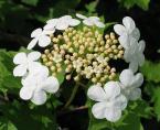 """paws """"wzór"""" (2005-09-04 09:31:08) komentarzy: 1, ostatni: ooo... jaki ładny kwiatek ;) ...ale wydaje mi się, że te płatki po lewej są trochę przepalone"""