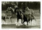 """Marta Staszczak """"jak konie w galopie, jak niebo nad nami.."""" (2005-09-17 18:38:58) komentarzy: 30, ostatni: ten ciemny kon na pierwszym planie troche za ciemny jednak... Ale mimo to zdjecie uwazam za bardzo dobre. Twoje 690708 sposrod tych w biegu, zwycieza w mojej ocenie!"""