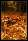 """NURT """"Leśne blaski jesieni"""" (2005-09-25 08:52:44) komentarzy: 73, ostatni: Złote szuruburu :)"""