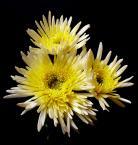 """fantazja107 """"kwiaty jesieni"""" (2005-10-01 18:04:45) komentarzy: 35, ostatni: Do martwoty jeszcze trochę czasu zostało"""