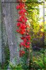 """Krakers """""""" (2005-10-06 10:53:42) komentarzy: 5, ostatni: motyw roślinny ciekawy....i to wszystko....:("""
