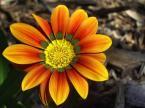 """Frotka """".kwiat."""" (2005-10-08 13:31:09) komentarzy: 2, ostatni: ładne kolorki"""
