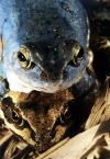 """LeszeK """"miłość z żabiej perspektywy"""" (2003-02-14 10:43:59) komentarzy: 11, ostatni: ..."""