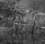 """toluse """"umarło drzewo"""" (2005-10-17 08:01:55) komentarzy: 25, ostatni: Bardzo przyjemne."""