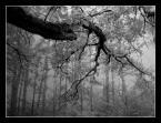 """MikE_ZorbA """"konar"""" (2005-10-21 22:16:23) komentarzy: 9, ostatni: bardzo dobry kadr i tonacja fotografii"""