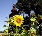 """binkowskig """"...słoneczniki..."""" (2005-10-24 15:31:04) komentarzy: 5, ostatni: Najtrudniejsze zestawienie - mocno ciemny obiekt w tle  i żółte kwiaty na pierwszym planie.... Może recepta jest inna pora dnia?"""
