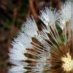 """Ravkosz """"oblicza jesieni #2"""" (2005-10-27 20:15:33) komentarzy: 91, ostatni: b. ładne :)"""