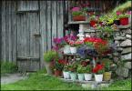 """irmi """"trochę radości w szarości"""" (2005-10-29 18:07:35) komentarzy: 1, ostatni: miły kątek kwiatkowy."""