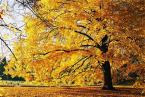 """Zeberka155 """"Jesienne drzewo..."""" (2005-10-31 21:00:51) komentarzy: 7, ostatni: Ladne drzewo"""