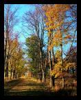 """marek2112 """"jesienna aleja"""" (2005-11-06 10:54:03) komentarzy: 44, ostatni: przyjemne i dynamiczne: ) podoba mi sie: )"""
