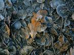 """ziczak """"późnojesienna tapeta przymrozkowa"""" (2005-11-08 11:25:36) komentarzy: 4, ostatni: niezwykły efekt, aż zimno mi się zrobiło, b.ładne"""