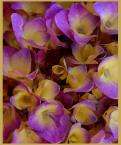 """beige """"letnich barw ulotna trwałość"""" (2005-11-16 20:36:38) komentarzy: 15, ostatni: inny niecodzienny swiat marzen:)"""