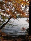 """paws """"pomarańczowa jesień"""" (2005-11-19 13:39:22) komentarzy: 3, ostatni: Ładny jesienny widok ,piękne kolorki!pozdr."""