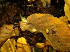 """osservatore """"Jesień"""" (2005-11-19 23:25:05) komentarzy: 5, ostatni: trochę ta jesień potargana, ale to późna jesień i to normalne."""