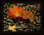 """Ungirith """"trzy kolory - jesien"""" (2005-12-06 16:47:42) komentarzy: 31, ostatni: Super!"""