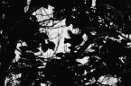 """reotaksja """"cień"""" (2005-12-13 00:41:36) komentarzy: 9, ostatni: przyczajony tygrys, ukryta wiewióra ;)"""