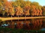 """kamel """"kolory jesieni..."""" (2005-12-25 21:59:15) komentarzy: 6, ostatni: ladne zdjecie, dobry kadr, przydaloby sie polowka szara, gora zdjecia jest zdecydowanie za jasna calosci kompozycji i to psuje troche zdjecie"""