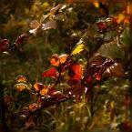 """Ravkosz """"kolory jesieni #3"""" (2006-01-03 22:01:47) komentarzy: 62, ostatni: wyszło kapitalnie ...:)"""