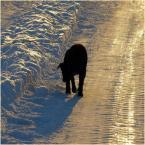 """koszmar69 """"czarno na... """"białym""""?"""" (2006-01-09 21:01:25) komentarzy: 23, ostatni: światło!"""