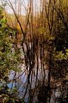 """Wilkowaty """"Uroczysko"""" (2006-01-12 22:19:38) komentarzy: 3, ostatni: drzewa woda"""