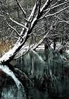 """sebol6 """"zima nad rzeką"""" (2006-01-15 21:19:30) komentarzy: 41, ostatni: ...:)"""