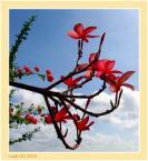 """Żaba-Ewa """"Pachnąca purpura"""" (2006-01-27 23:28:36) komentarzy: 26, ostatni: ladniutkie"""