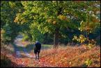 """kariola """"Droga jesieni .."""" (2006-01-31 22:23:30) komentarzy: 50, ostatni: gdy jesień się zaczyna....życie nabiera nowych barw...."""