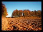 """marek2112 """"październik"""" (2006-02-05 08:51:46) komentarzy: 34, ostatni: robert_m: światło tak, a do tego cpl i połówka szara; rene144: pozdrawiam :)"""