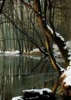 """sebol6 """".... no i Myśla..."""" (2006-02-07 23:09:32) komentarzy: 56, ostatni: piękna leśna kliszówka"""