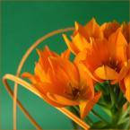 """Zazula """"Oranjezicht"""" (2006-02-15 16:10:28) komentarzy: 9, ostatni: ładne.. ciepłe kolory, miłe kadrowanie.. podoba mi się, pozdrawiam"""