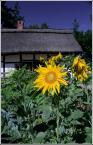 """Zbigniew Fidos """""""" (2006-02-20 22:34:42) komentarzy: 53, ostatni: to jest beznadziejne zdjęcie. balagan w pierwszym planie, chata wygląda jak pół dupy zza krzaka, wyglada jakbym robil fotke domku, tylko się zielsko wcięło :o)"""