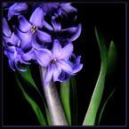 """beige """"... ich dwoje ..."""" (2006-02-21 19:05:10) komentarzy: 60, ostatni: Piękna kompozycja i barwy!"""