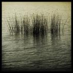"""DELF """"wyspa szumu"""" (2006-02-25 10:47:52) komentarzy: 73, ostatni: szuwarki >:)"""