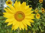 """binkowskig """"...na przekór zimie II.."""" (2006-02-25 12:40:41) komentarzy: 10, ostatni: ładne słoneczko ,udana fotka ,"""