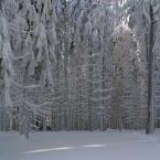 """HEJA """"Zimowy las"""" (2006-02-26 20:48:36) komentarzy: 23, ostatni: piękne"""